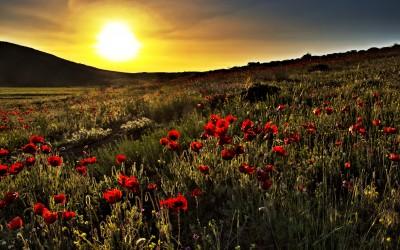 ardabil-sunset-flowers-iran-traveling-center
