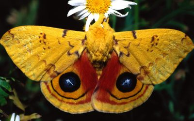 Hormozgan Butterfly Watching Tour in 15 Days