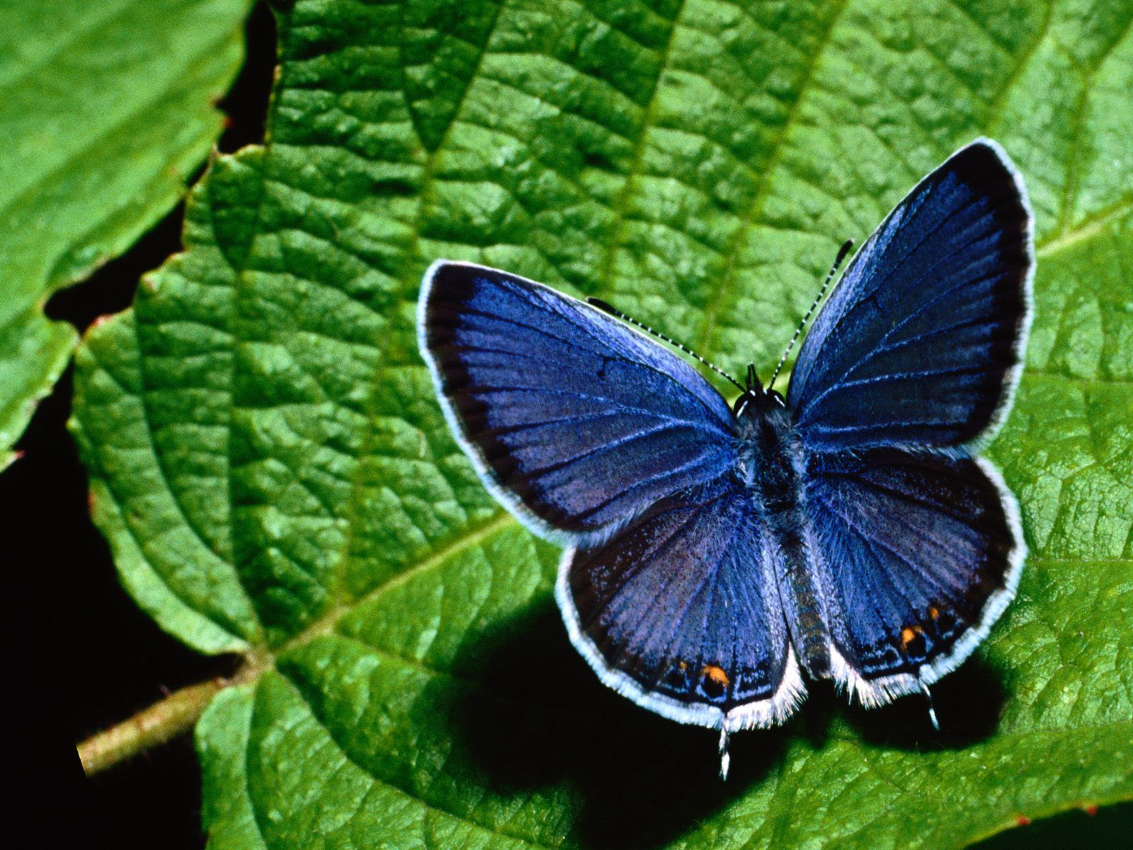 butterfly-05-iran-traveling-center