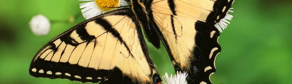 butterfly-06-iran-traveling-center