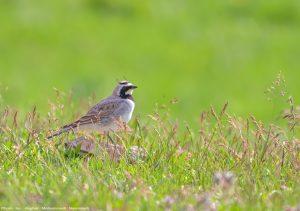 Irantravelingcenter-Iran Bird Watching Tour
