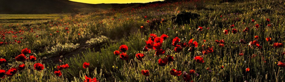 ardabil-sunset-flowers-iran-traveling-center