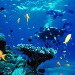 Diving Tour in qeshm Island