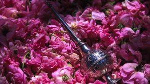 Rose water Season in Iran.iran traveling center,blog