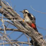 irantravelingcenter-Iran Bird Watching